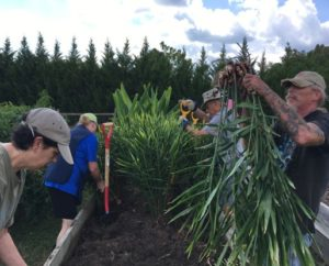 group ginger picking