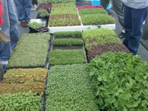 Cover photo for What Are Microgreens?