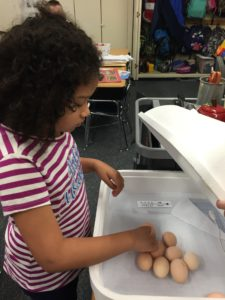child turning eggs