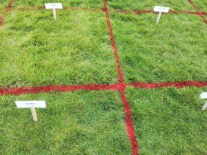 K31 grass
