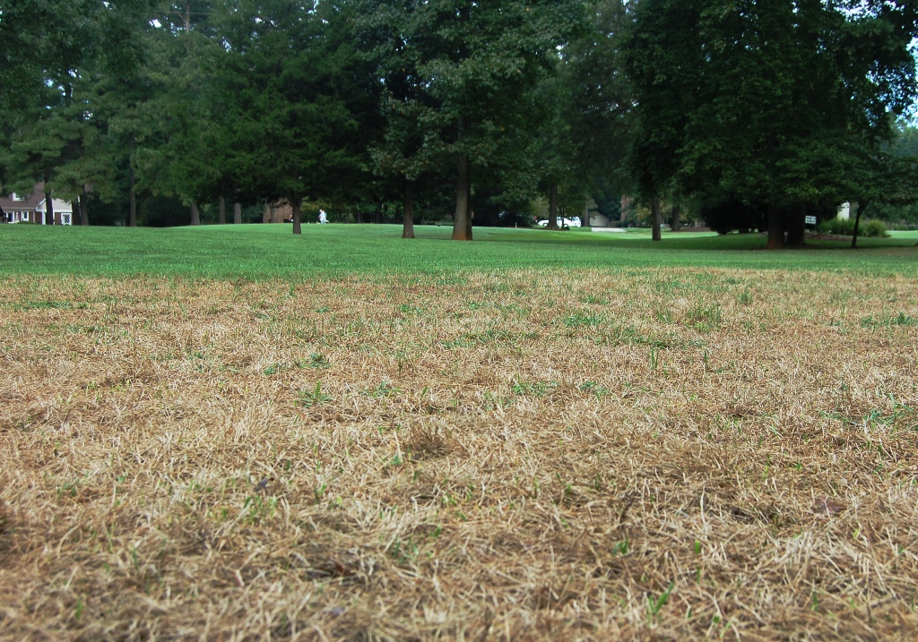 Fall Army Worms North Carolina Cooperative Extension