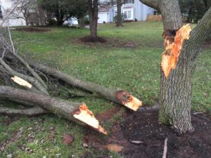 broke tree limb