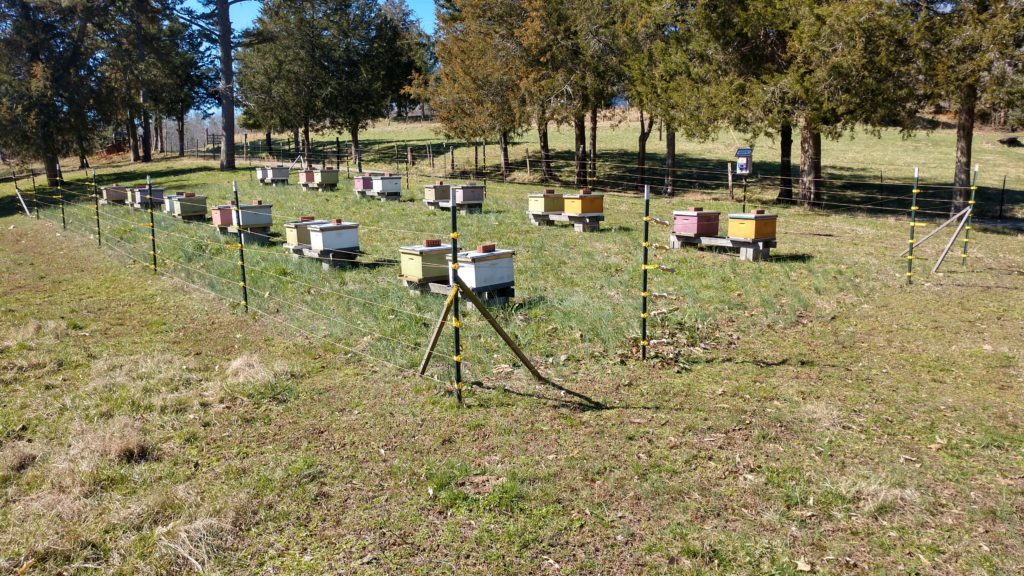 A simple electric fence helps this beekeeper sleep better knowing his hives are protected from bears. (credit Seth Nagy)