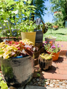 containers with flowers