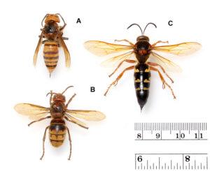 3 wasps