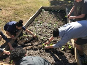 Students learning how to plant in a raised bed.