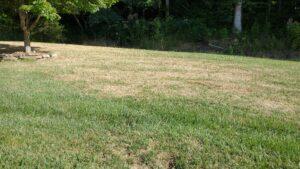fall army worm damage in lawn
