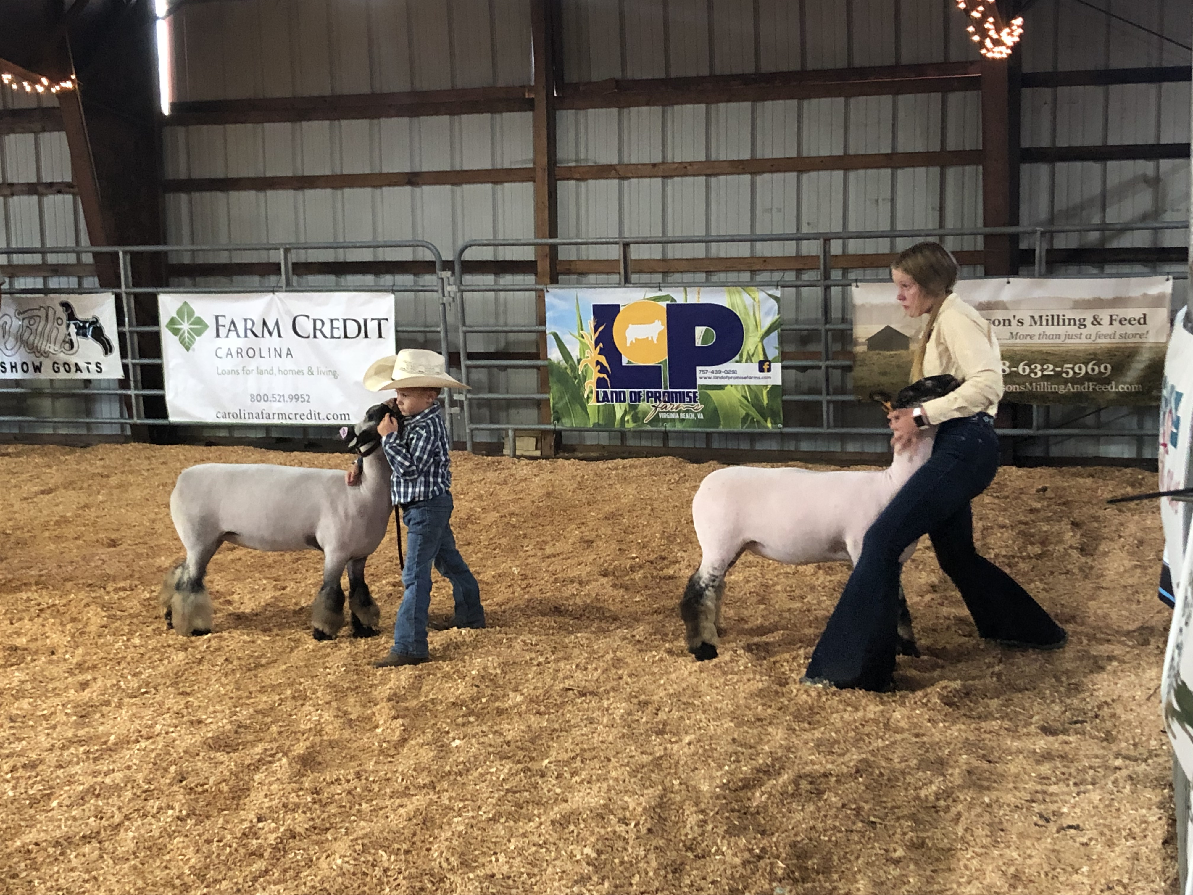 Harrison Ford and Ellen Simmons make eye contact with the judge as they show their lambs at the 2021 fair.