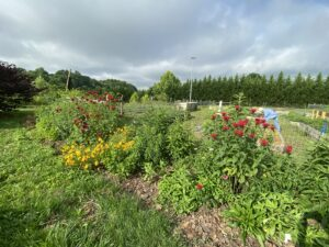 Converted grass space into pollinator garden out at Unity Park and Community Gardens.